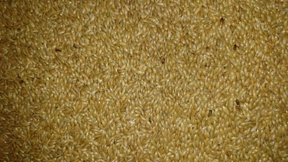 Plain Canary Seed Kingsbury - Mischief Pet Products