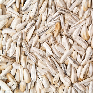 White Sunflower Seeds - Westerman's - Mischief Pet Products