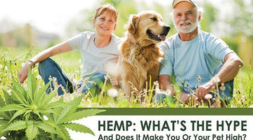 Hemp: What's the Hype and Does it Make You (or Your Pet) High?