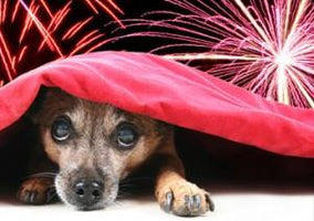 Create Safe Spaces for Pooch During Fourth of July