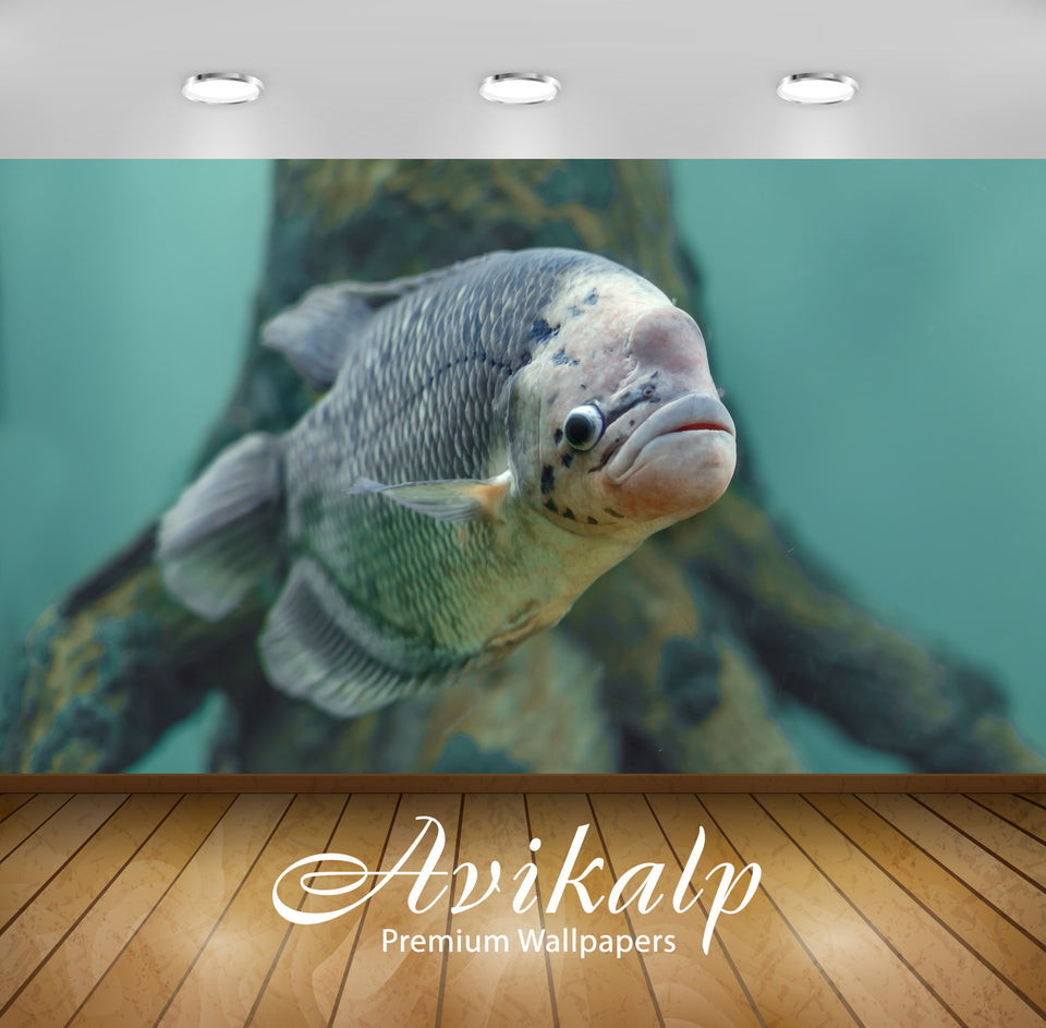 Avikalp Exclusive Fish AWI1123 HD Wallpapers for Living room, Hall, Kids Room, Kitchen, TV Backgroun