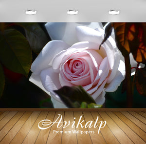 Avikalp Exclusive White Rose AWI1252 HD Wallpapers for Living room, Hall, Kids Room, Kitchen, TV Bac