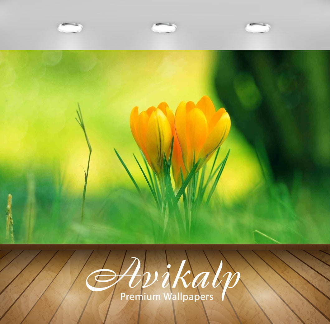 Avikalp Exclusive Awi1268 Tulip Full HD Wallpapers for Living room, Hall, Kids Room, Kitchen, TV Bac