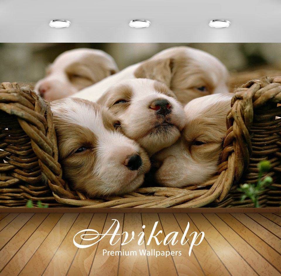 Avikalp Exclusive Awi1343 Cute Puppies Full HD Wallpapers for Living room, Hall, Kids Room, Kitchen,