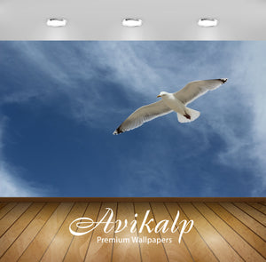 Avikalp Exclusive Premium gull HD Wallpapers for Living room, Hall, Kids Room, Kitchen, TV Backgroun