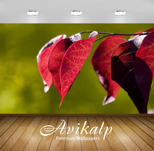 Avikalp Exclusive Awi1353 Red Leaves Full HD Wallpapers for Living room, Hall, Kids Room, Kitchen, T