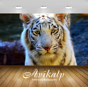 Avikalp Exclusive Awi1398 Tigers Full HD Wallpapers for Living room, Hall, Kids Room, Kitchen, TV Ba