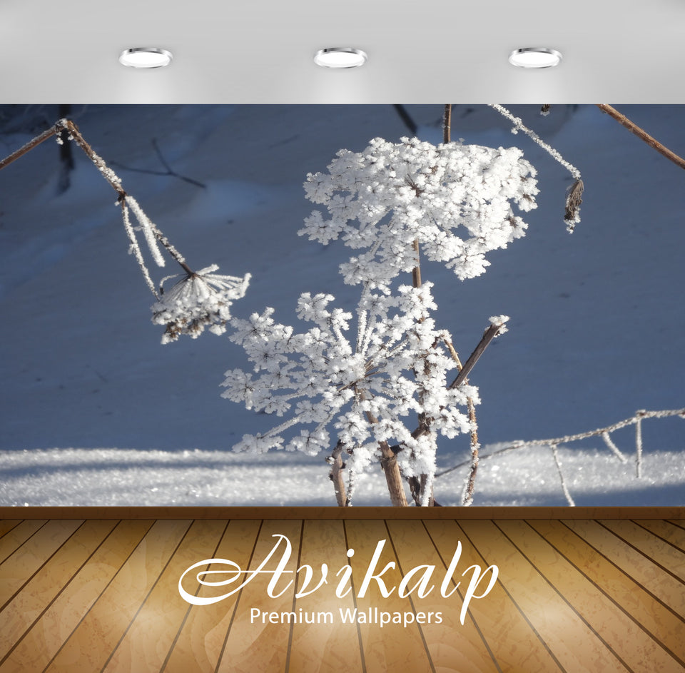 Avikalp Exclusive Premium ice HD Wallpapers for Living room, Hall, Kids Room, Kitchen, TV Background