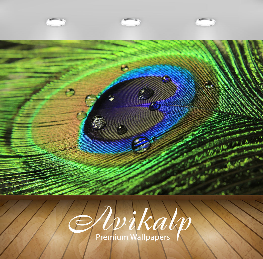 Avikalp Exclusive Awi1493 Beautiful Peacock Feather Full HD Wallpapers for Living room, Hall, Kids R