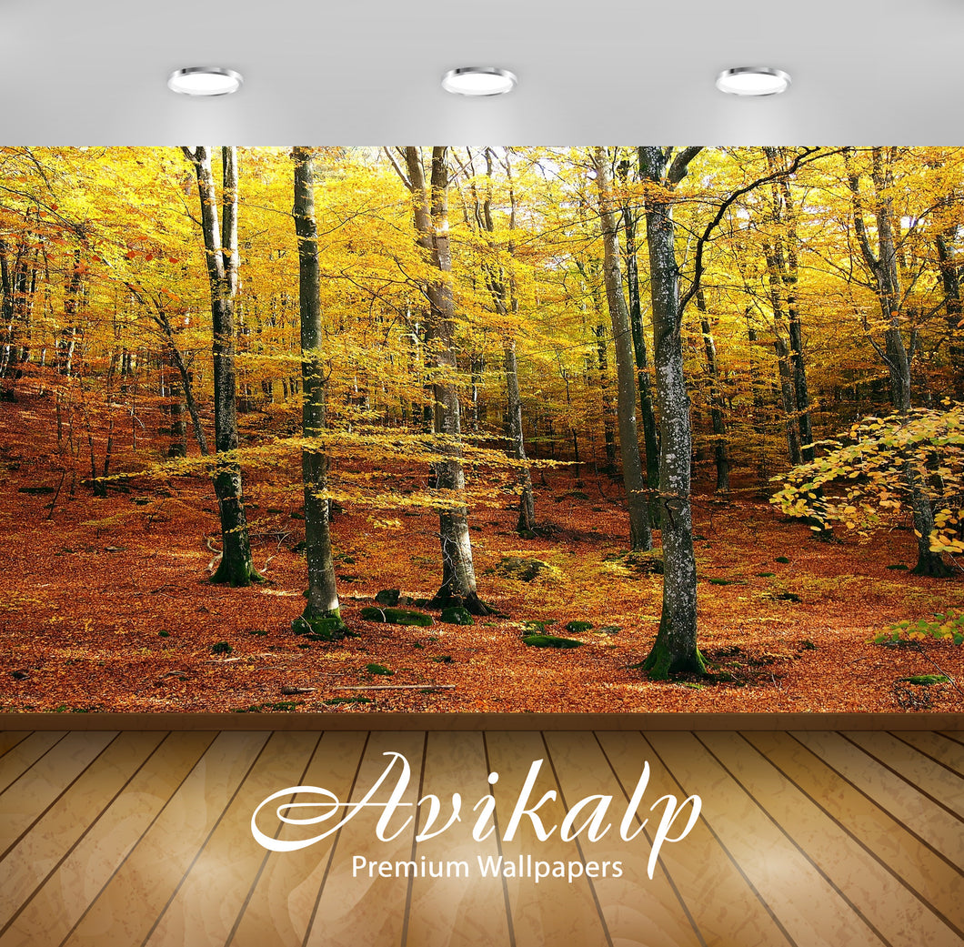 Avikalp Exclusive Premium beech HD Wallpapers for Living room, Hall, Kids Room, Kitchen, TV Backgrou