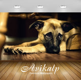 Avikalp Exclusive Awi1563 Pet Dog Full HD Wallpapers for Living room, Hall, Kids Room, Kitchen, TV B