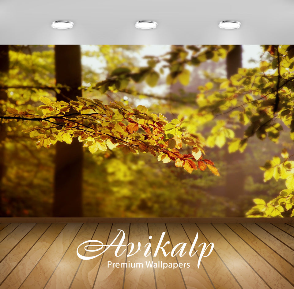 Avikalp Exclusive Awi1611 Beautiful Leaves Scenery Full HD Wallpapers for Living room, Hall, Kids Ro