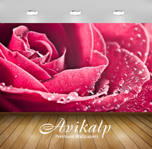 Avikalp Exclusive Awi1650 Beautiful Rose Full HD Wallpapers for Living room, Hall, Kids Room, Kitche