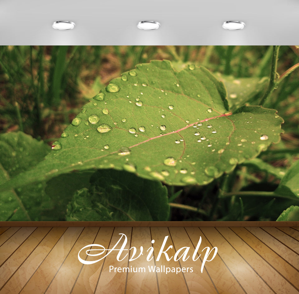 Avikalp Exclusive Awi1686 Beautiful Leaf Full HD Wallpapers for Living room, Hall, Kids Room, Kitche