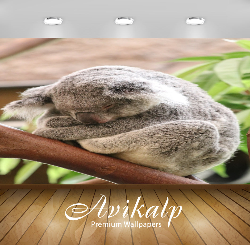Avikalp Exclusive Premium koala HD Wallpapers for Living room, Hall, Kids Room, Kitchen, TV Backgrou