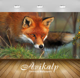 Avikalp Exclusive Awi1771 Fox Full HD Wallpapers for Living room, Hall, Kids Room, Kitchen, TV Backg