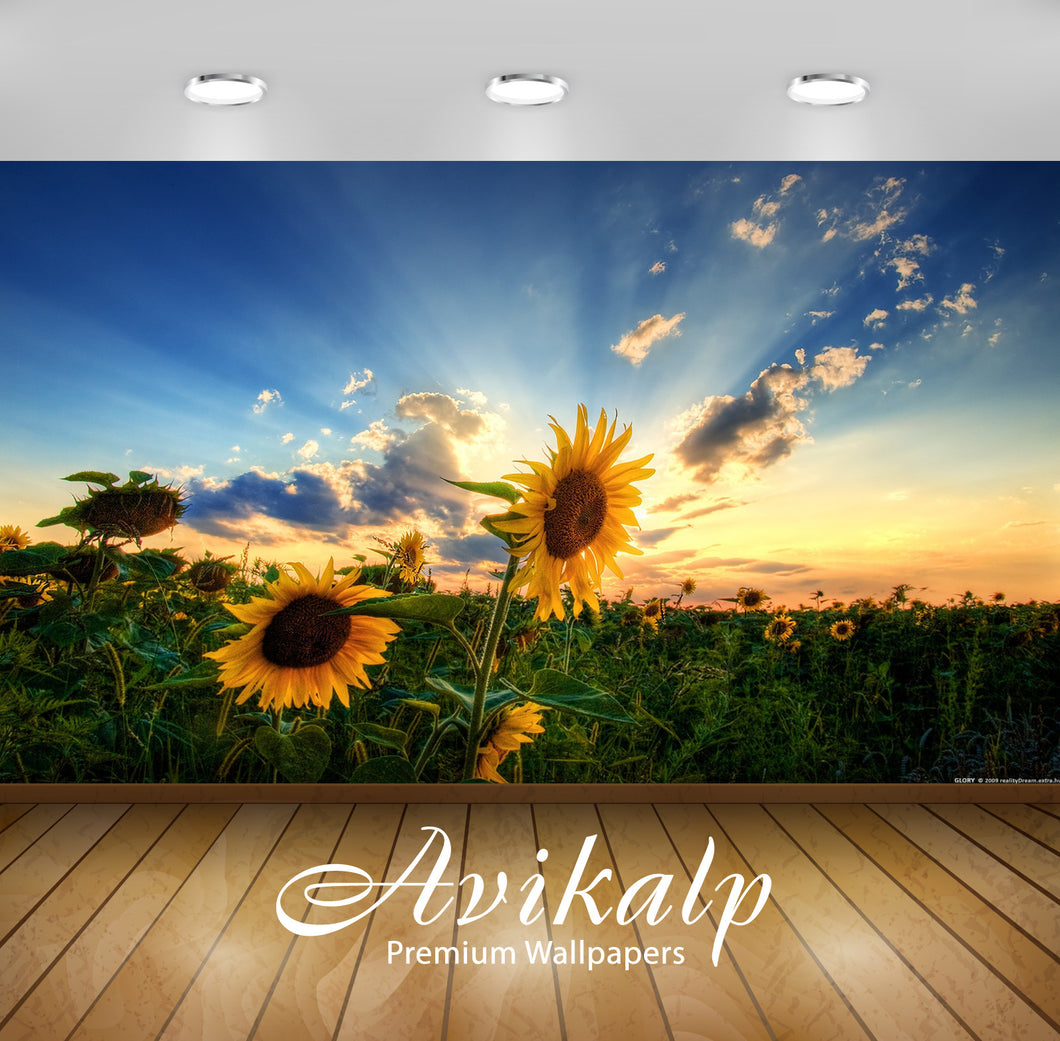 Avikalp Exclusive Awi1950 Beautiful Sunflowers Full HD Wallpapers for Living room, Hall, Kids Room,