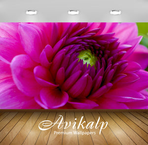 Avikalp Exclusive Awi2038 Beautiful Purple Dahlia Macro Flower  Full HD Wallpapers for Living room,