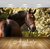 Avikalp Exclusive Awi2040 Brown Horse  Full HD Wallpapers for Living room, Hall, Kids Room, Kitchen,
