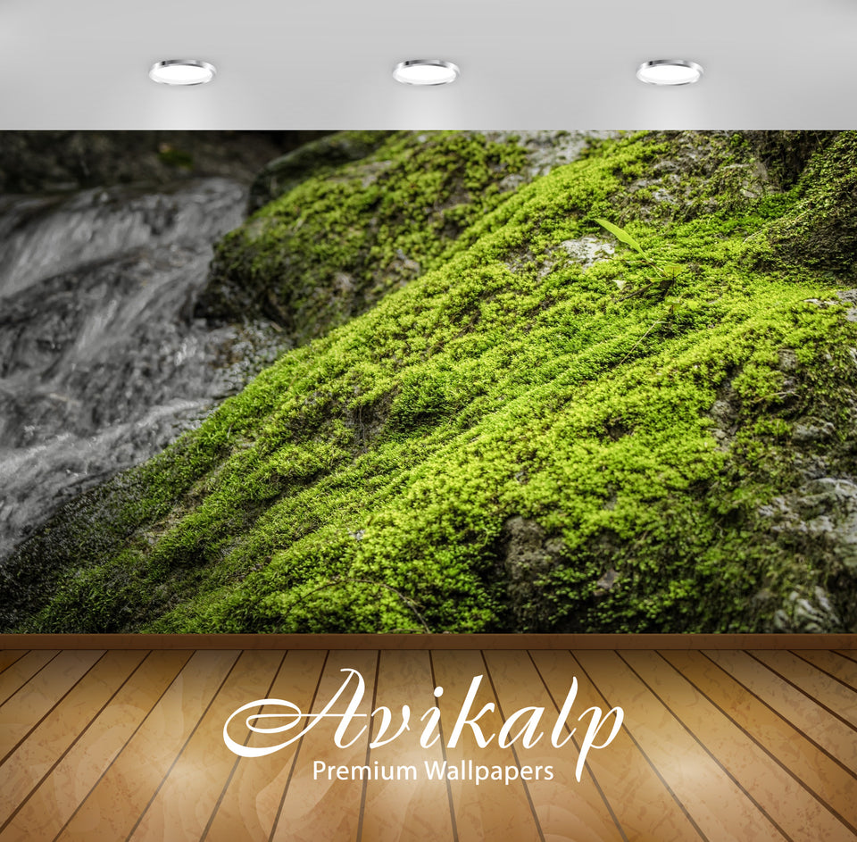 Avikalp Exclusive Premium moss HD Wallpapers for Living room, Hall, Kids Room, Kitchen, TV Backgroun