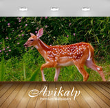 Avikalp Exclusive Awi2360 A Young Reindeer Grazing In The Meadow Full HD Wallpapers for Living room,