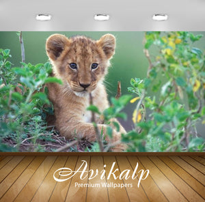 Avikalp Exclusive Awi2370 Animal Young Lion In Green Bush Full HD Wallpapers for Living room, Hall,