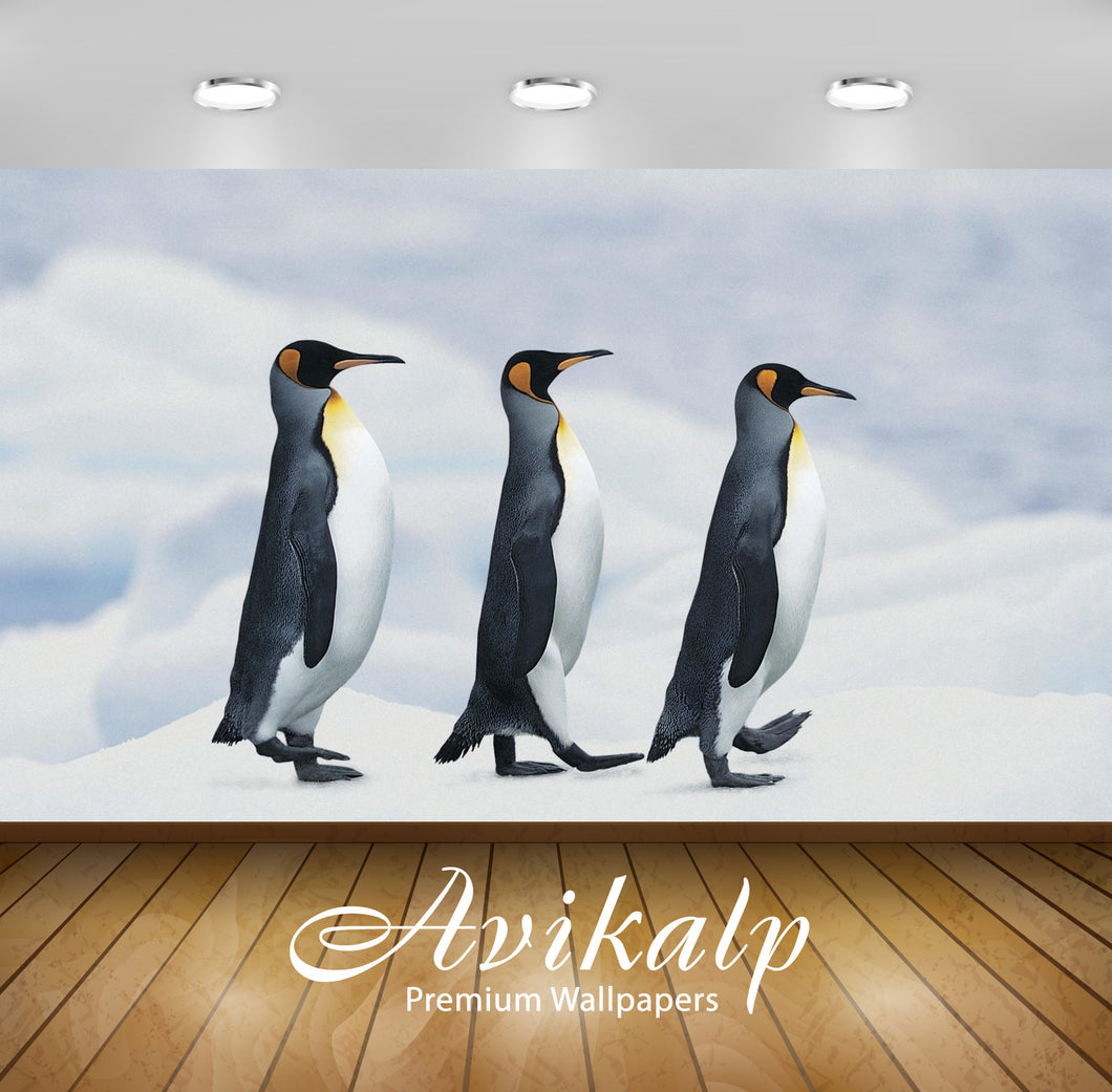 Avikalp Exclusive Awi2375 Animals Of Antarctica Penguins Marching Through The Snow Full HD Wallpaper