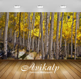 Avikalp Exclusive Awi2399 Autumn Yellow Of Aspen Trees National Forest Gunnison Near Lake City Full