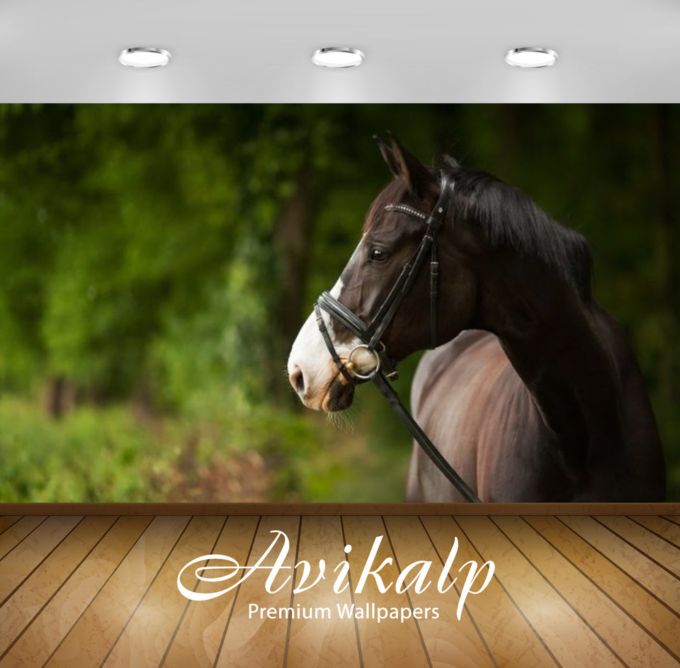 Avikalp Exclusive Awi2425 Beautiful Horse Full HD Wallpapers for Living room, Hall, Kids Room, Kitch