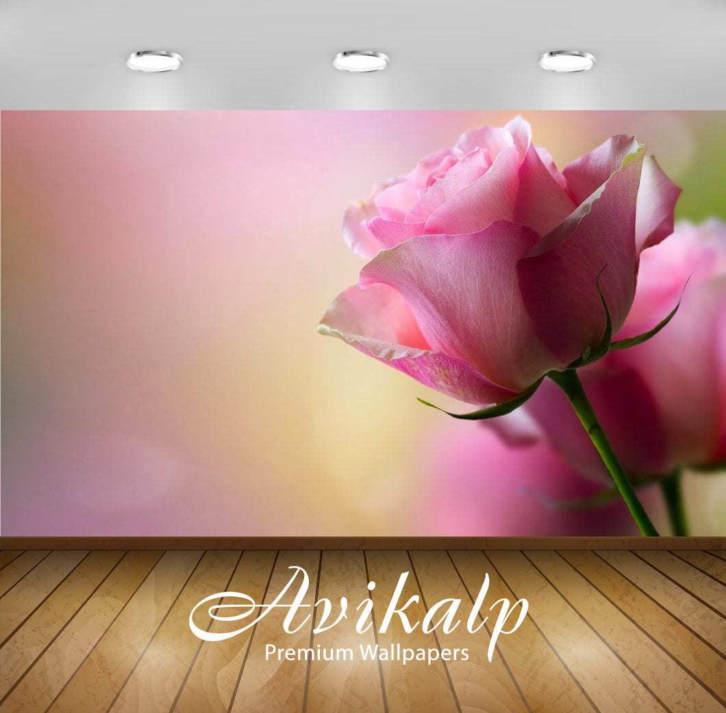 Avikalp Exclusive Awi2428 Beautiful Pink Rose Full HD Wallpapers for Living room, Hall, Kids Room, K
