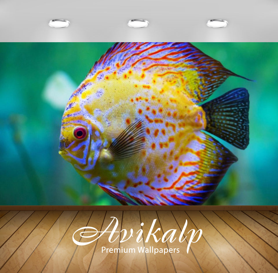 Avikalp Exclusive Awi2437 Beautiful Yellow Sea Fish Full HD Wallpapers for Living room, Hall, Kids R