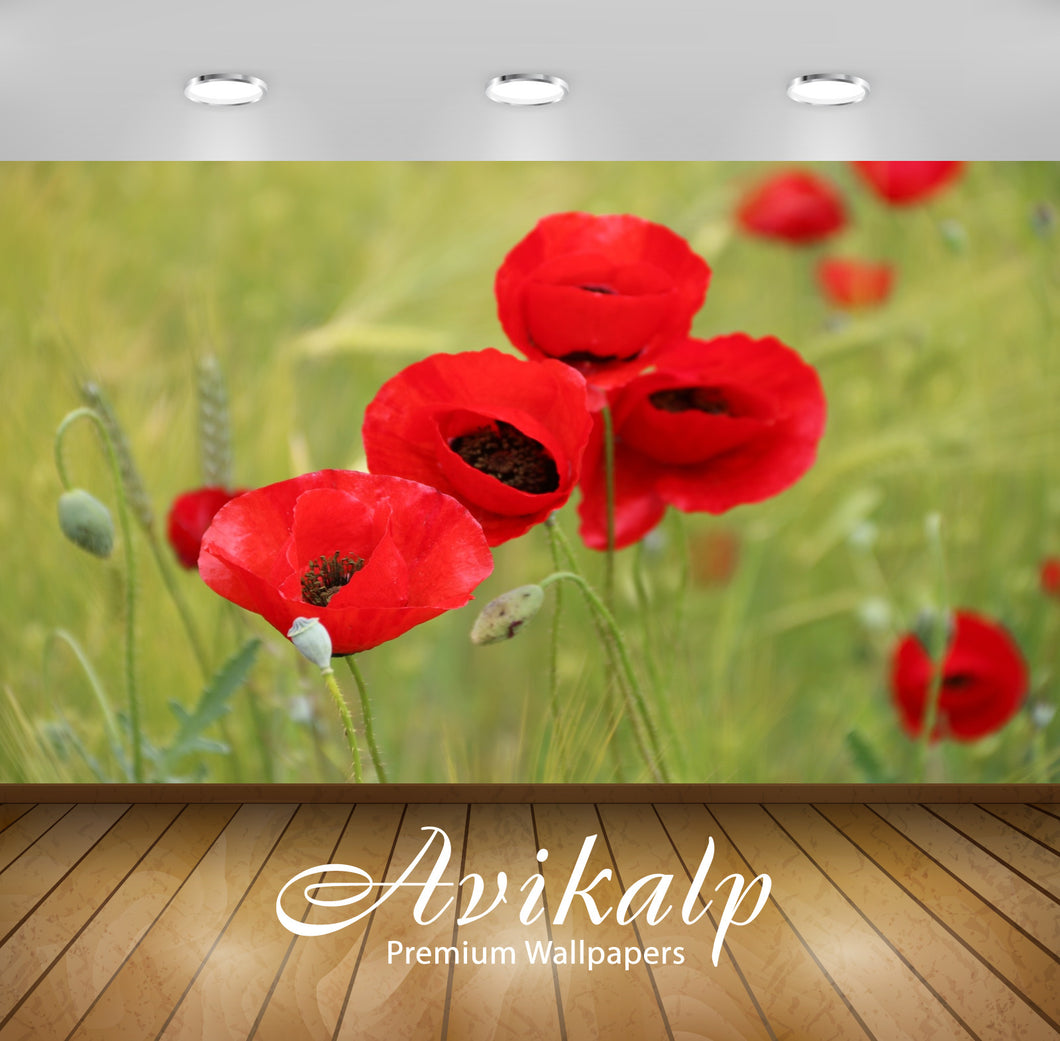 Avikalp Exclusive Premium papaver HD Wallpapers for Living room, Hall, Kids Room, Kitchen, TV Backgr