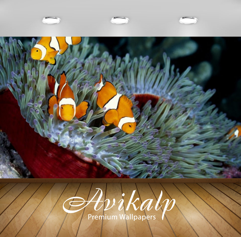 Avikalp Exclusive Awi2508 Clownfish Sea Corals Full HD Wallpapers for Living room, Hall, Kids Room,