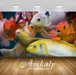 Avikalp Exclusive Awi2511 Colorful Fish Full HD Wallpapers for Living room, Hall, Kids Room, Kitchen