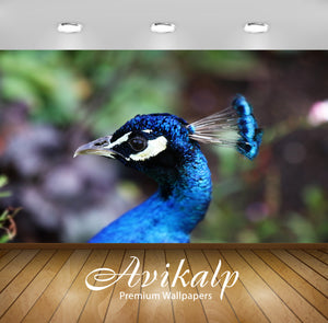 Avikalp Exclusive Premium peacock HD Wallpapers for Living room, Hall, Kids Room, Kitchen, TV Backgr