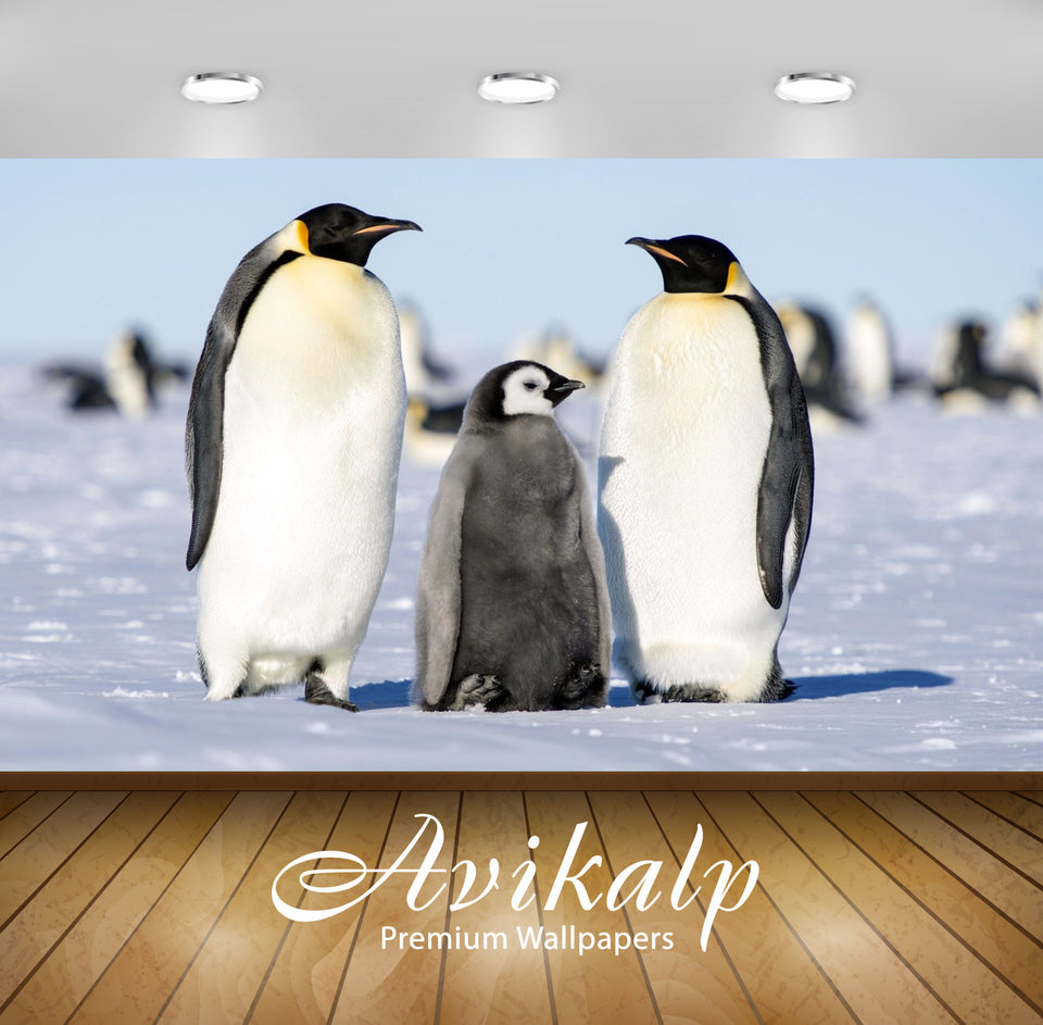 Avikalp Exclusive Awi2590 Emperor Penguin Aptenodytes Forsteri Two Adults Penguins Male And Female W