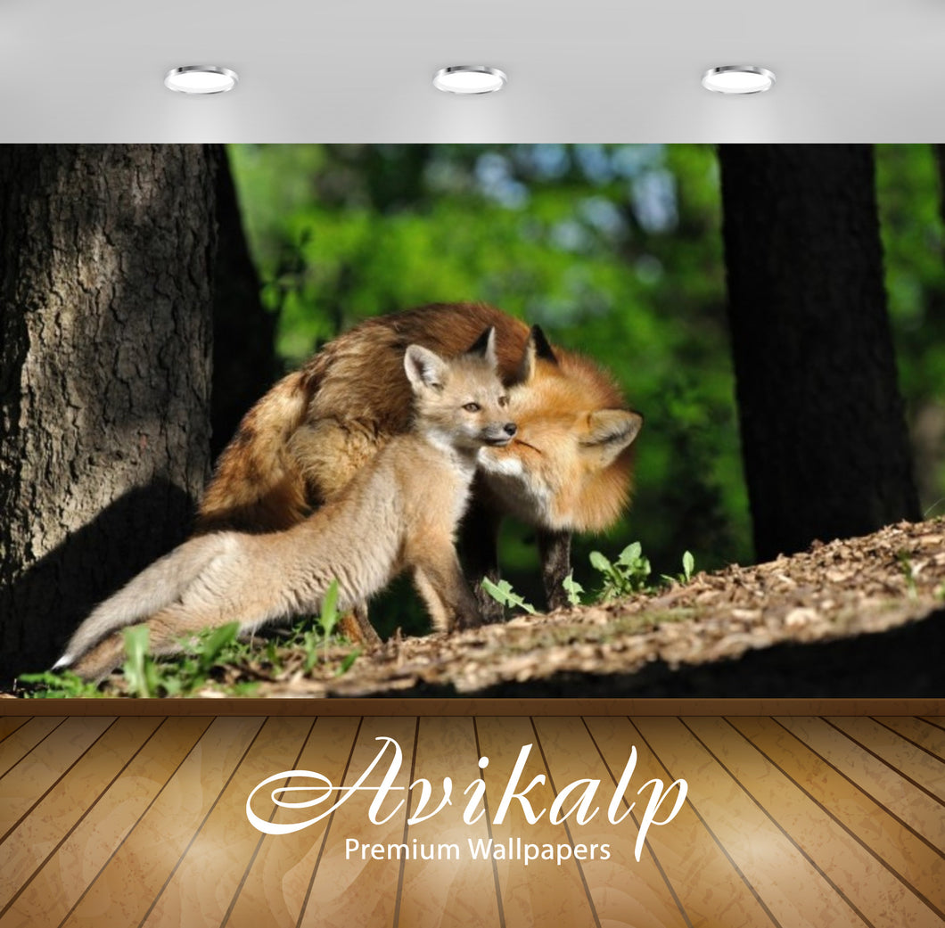 Avikalp Exclusive Awi2643 Fox Full HD Wallpapers for Living room, Hall, Kids Room, Kitchen, TV Backg
