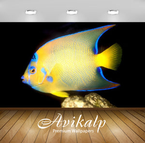 Avikalp Exclusive Awi2715 Holacanthus Ciliaris Subadult Fish Full HD Wallpapers for Living room, Hal