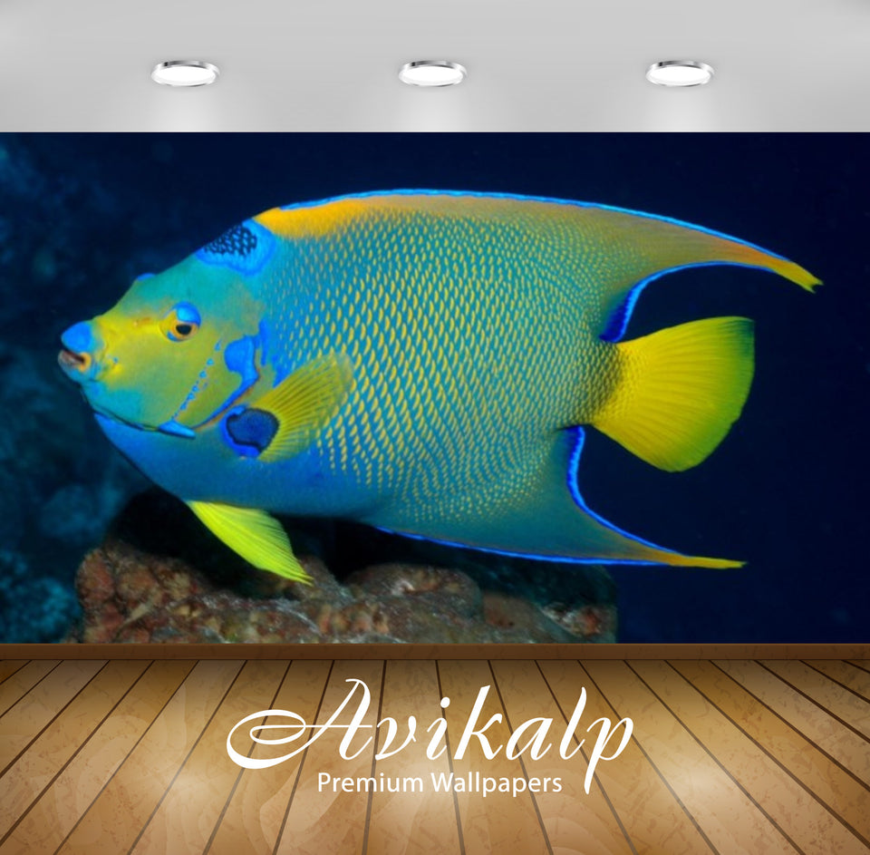 Avikalp Exclusive Awi2716 Holocanthus Bermudensis Bermuda Blue Angelfish Full HD Wallpapers for Livi