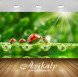 Avikalp Exclusive Awi2764 Ladybug Sun Rays Grass Morning Dew Drops Water Full HD Wallpapers for Livi
