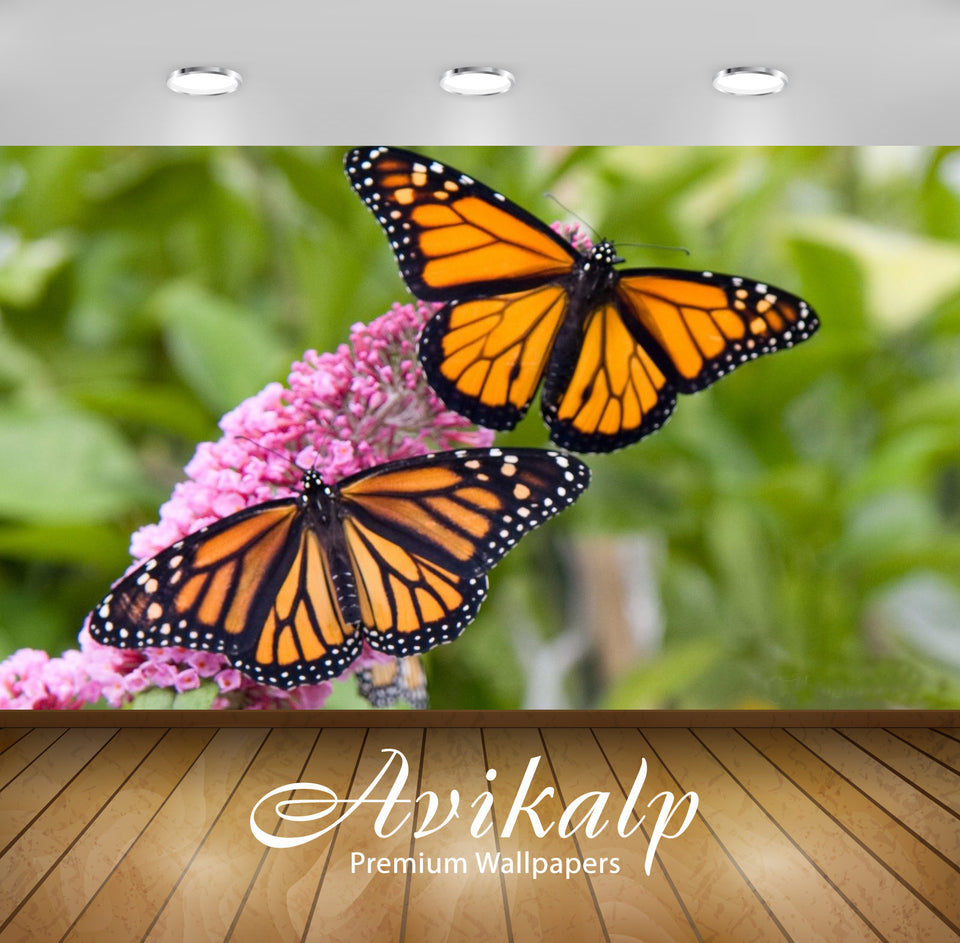 Avikalp Exclusive Awi2818 Male And Female Monarch Butterfly On Pink Flowers Full HD Wallpapers for L