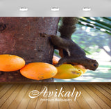 Avikalp Exclusive Premium squirrel HD Wallpapers for Living room, Hall, Kids Room, Kitchen, TV Backg