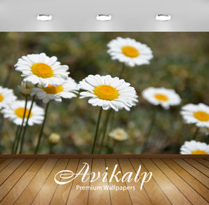 Avikalp Exclusive Premium turkey HD Wallpapers for Living room, Hall, Kids Room, Kitchen, TV Backgro