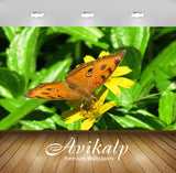Avikalp Exclusive Premium butterfly HD Wallpapers for Living room, Hall, Kids Room, Kitchen, TV Back