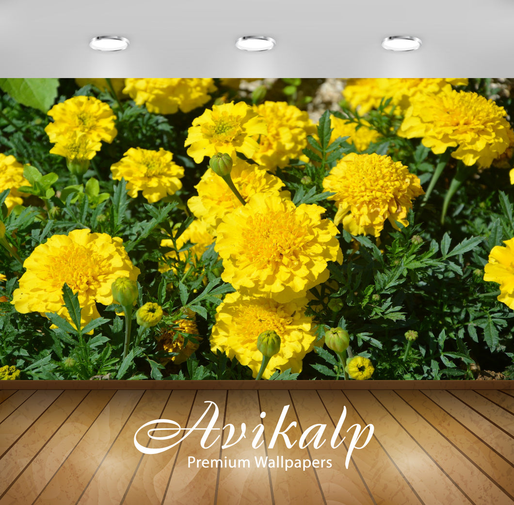 Avikalp Exclusive Premium carnations HD Wallpapers for Living room, Hall, Kids Room, Kitchen, TV Bac