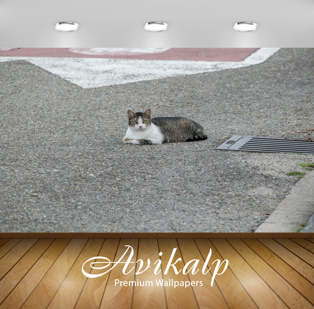 Avikalp Exclusive Premium cat HD Wallpapers for Living room, Hall, Kids Room, Kitchen, TV Background
