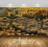 Avikalp Exclusive Awi6173 Shades Of Autumn In The Forest Nature Full HD Wallpapers for Living room,