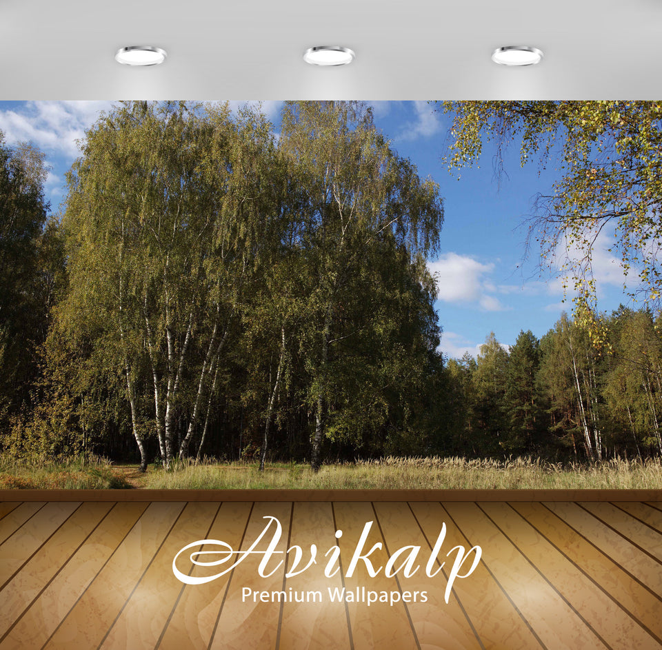 Avikalp Exclusive Awi6378 Summer Birch Forest Nature Full HD Wallpapers for Living room, Hall, Kids