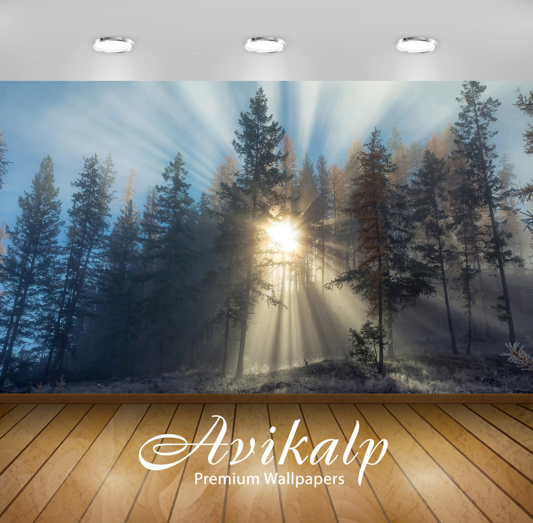 Avikalp Exclusive Awi6399 Sun Light Piercing Through The Foggy Forest Nature Full HD Wallpapers for