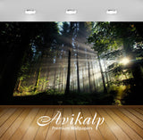 Avikalp Exclusive Awi6417 Sun Shining Through The Forest Nature Full HD Wallpapers for Living room,